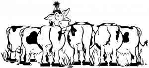 cowss